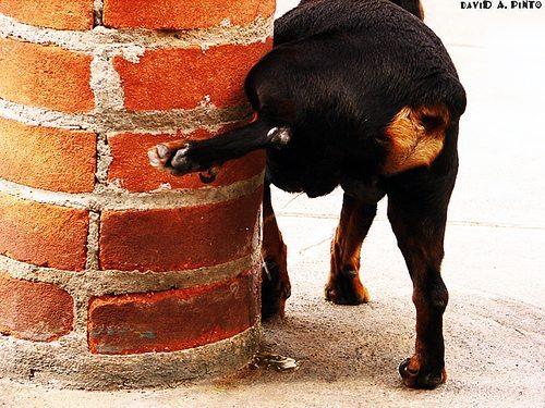 Dog Urination Problems