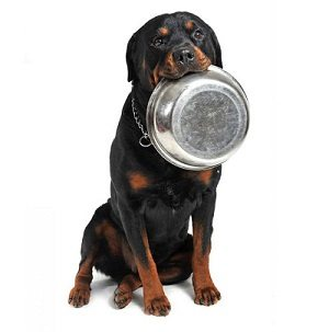 How Much To Feed Your Rottweiler